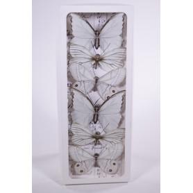 Papillons sur pic blanc