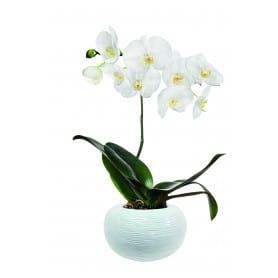 Vase boule orchidée D. 22 cm