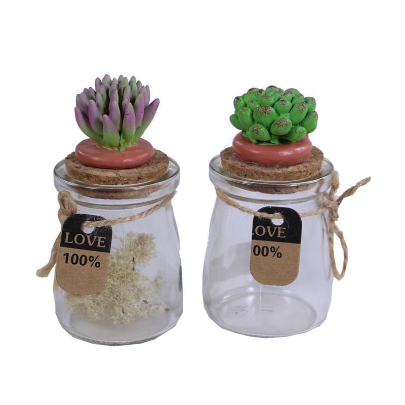 Petits bocaux en verre  et leurs succulentes  sur bouchon