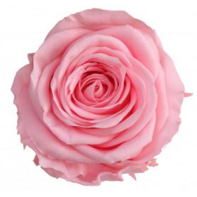Tête de rose standard