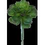 Succulente plante artificielle intérieur
