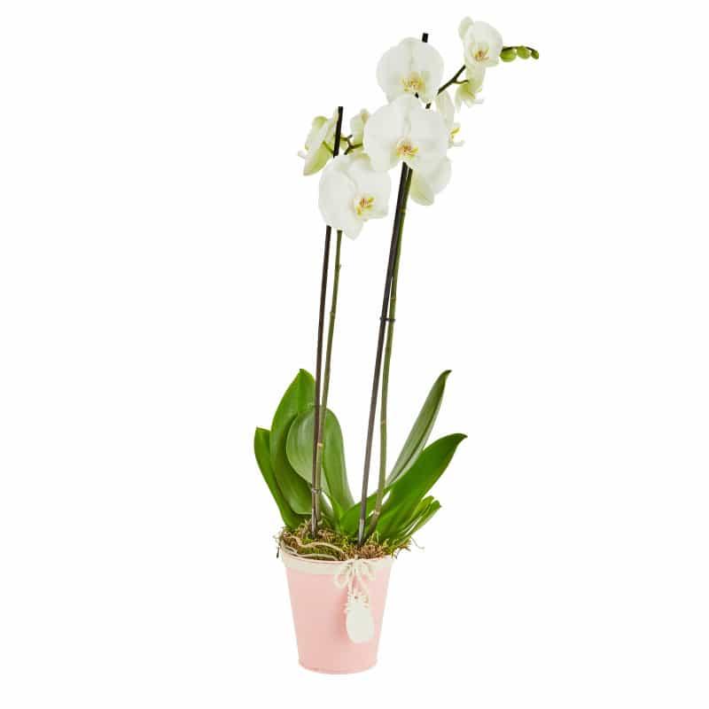 Pot de fleurs rond pampille ananas Ziaora - matériel fleuriste