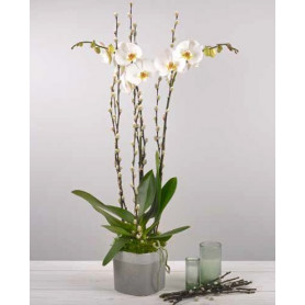 Pot de fleurs carré en céramique bicolore Nacre - fourniture fleuriste