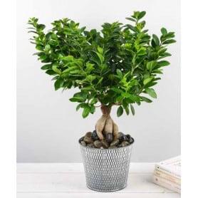 pot de fleurs rond en zinc texturé Ginseng - fourniture fleuriste