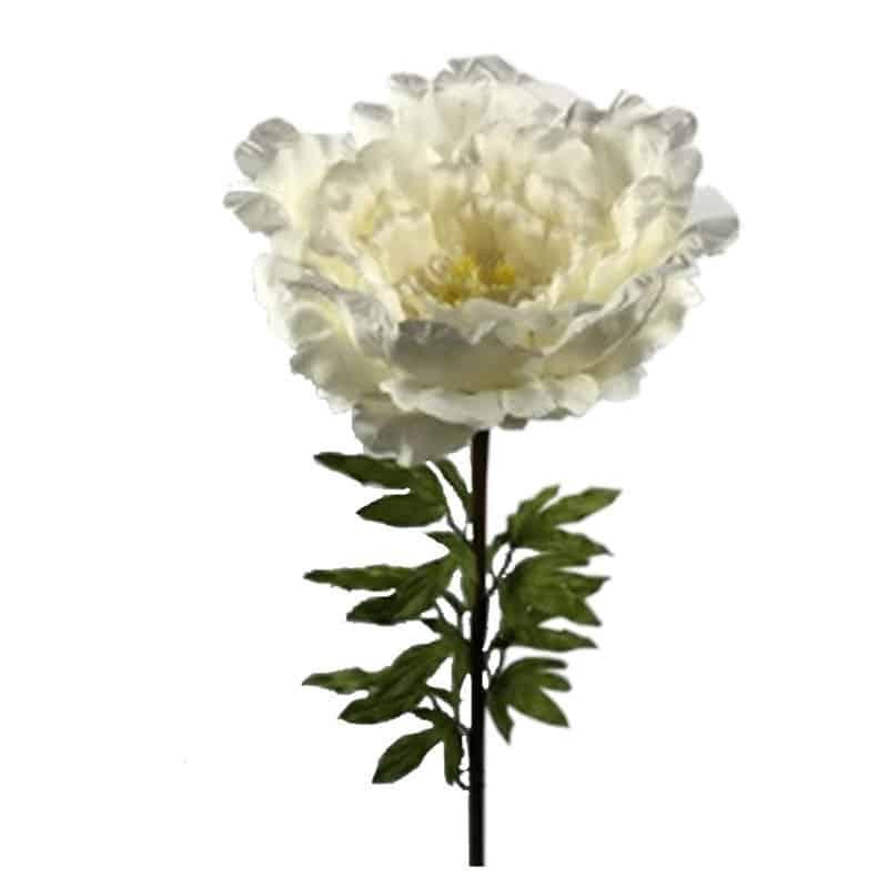 Pivoine géante Perrina - Grossiste fleuriste