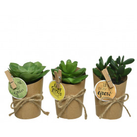 Assortiment de succulentes dans présentoir Katus - Matériel fleuriste