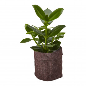 Cache pot rond en jute Zern - grossiste décoration florale