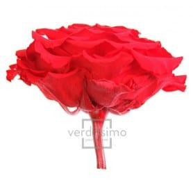Tête de rose éternelle géante - grossiste en fournitures fleuristes