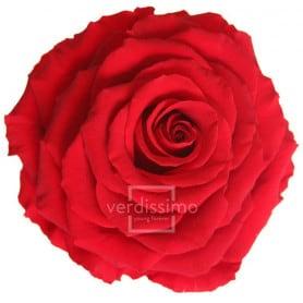Tête de rose éternelle géante