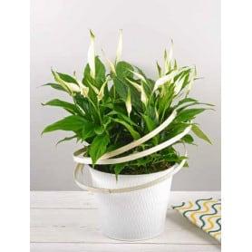 Pot de fleurs rond en zinc motif treillis Asilis