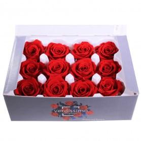 Boîte de 12 mini têtes de rose éternelle  - Grossiste fleuriste