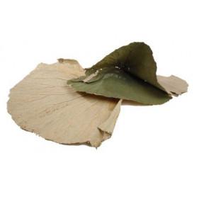 Sachet de feuilles larges...