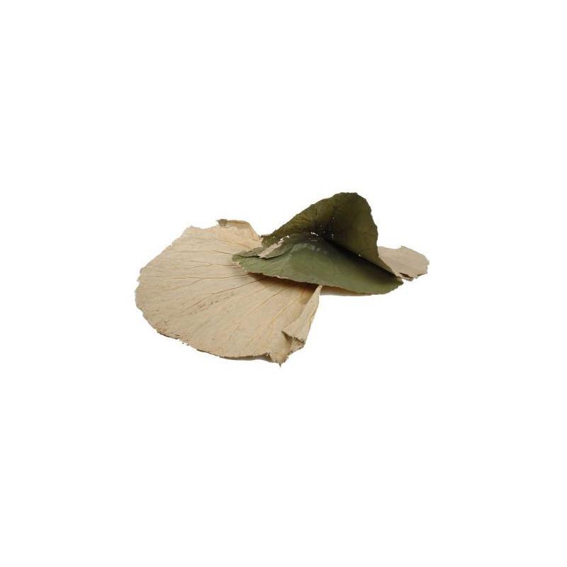 Sachet de feuilles larges de Lotus - Grossiste fleuriste