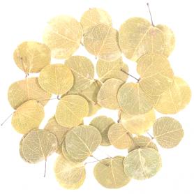 Sachet de feuilles de Moneta