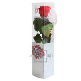 Mini rose tigée Amorosa - 2...