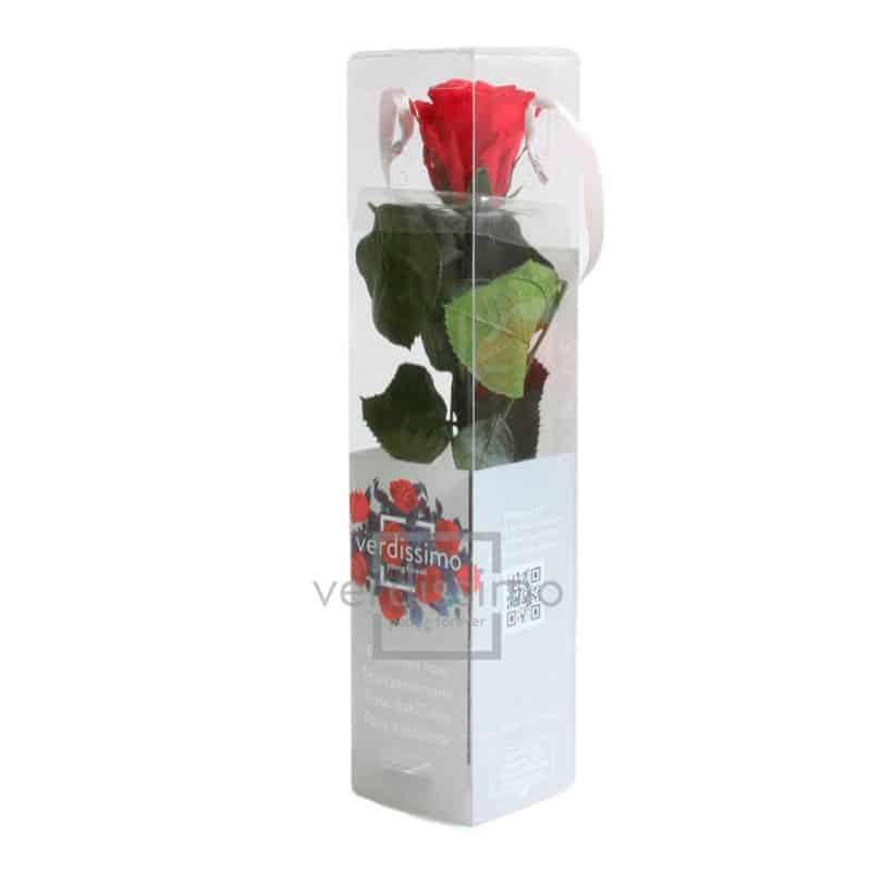Mini rose tigée Amorosa - Grossiste fleuriste