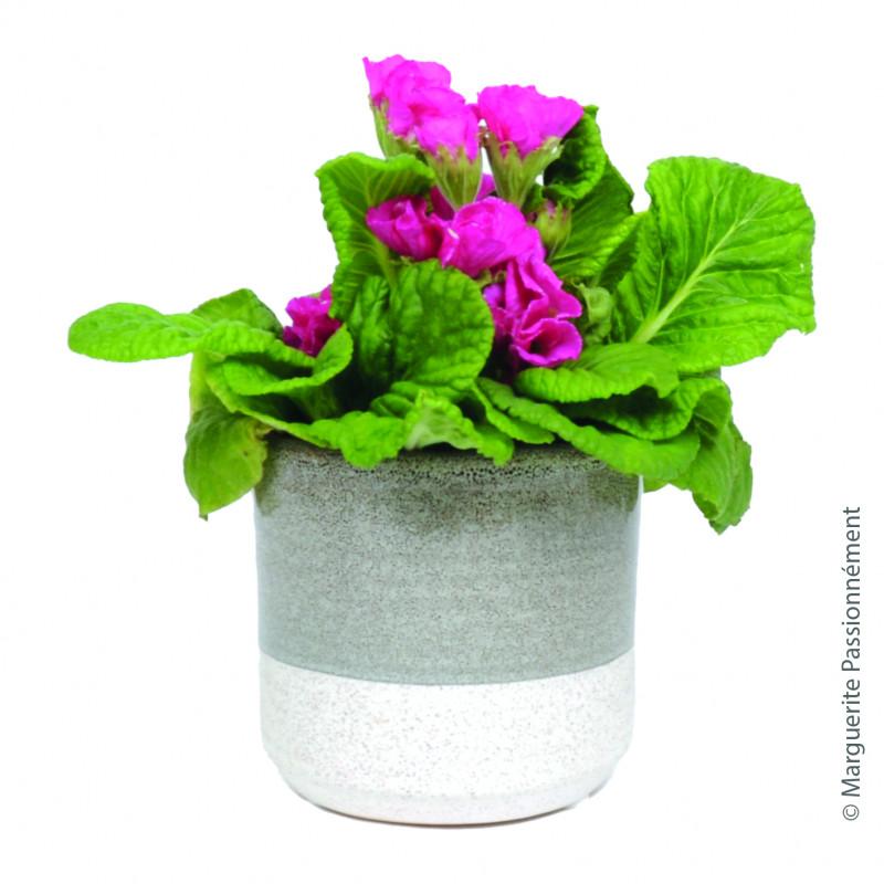 Cache-pot en céramique Limea - Grossiste fleuriste Renaud