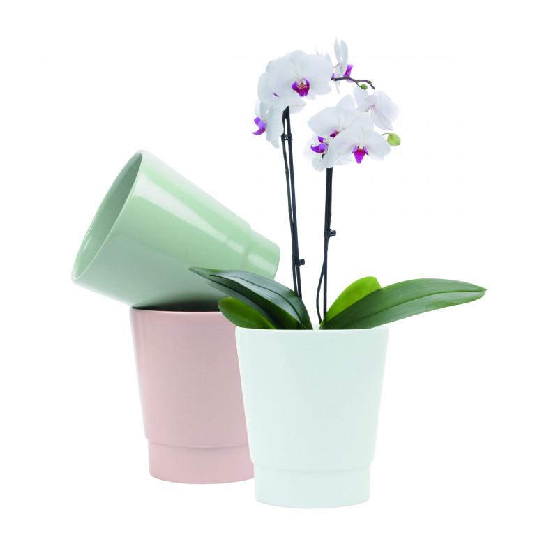 """Pots phalaéno céramique """"premium"""" - Grossiste pour fleuriste"""