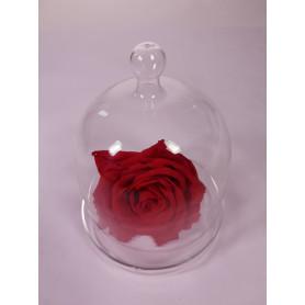 Cloche en verre à poser Emilia - Grossiste fleuriste décoration mariage