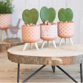 Cache-pot rond en ciment sur pied bois - Grossiste fleuriste