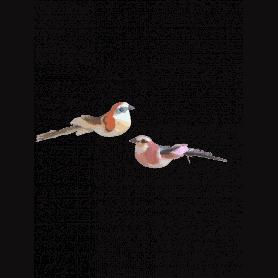 12 oiseaux sur pic Visua
