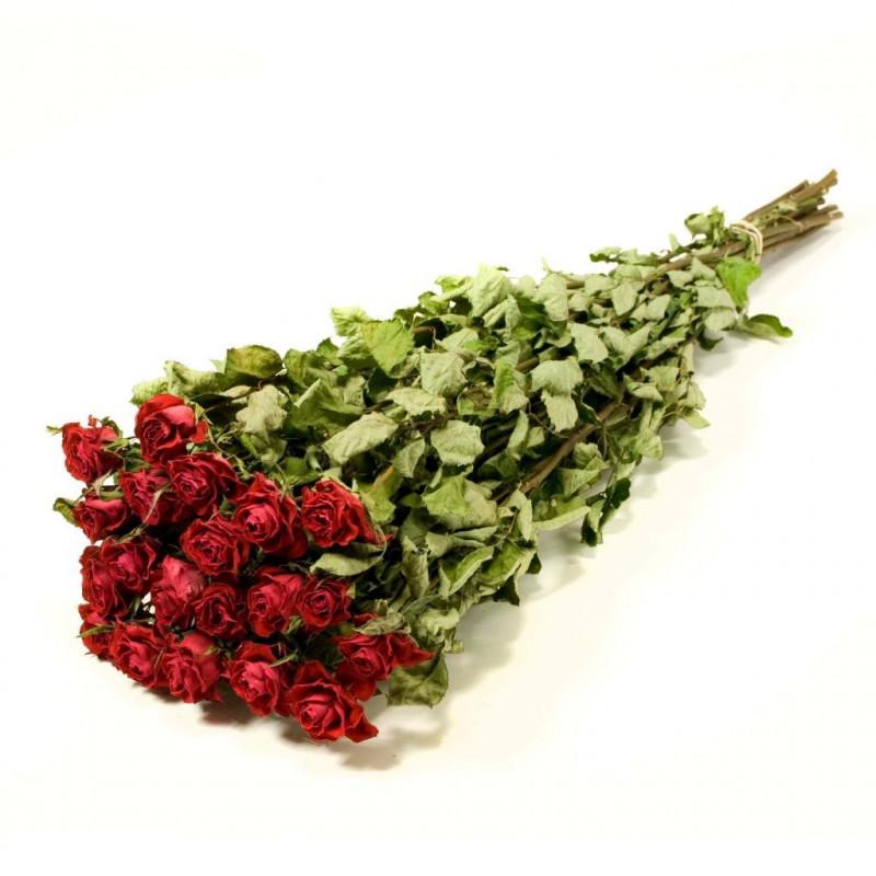 Botte de 20 roses naturelles séchées Ytte - Grossiste fleurs séchées