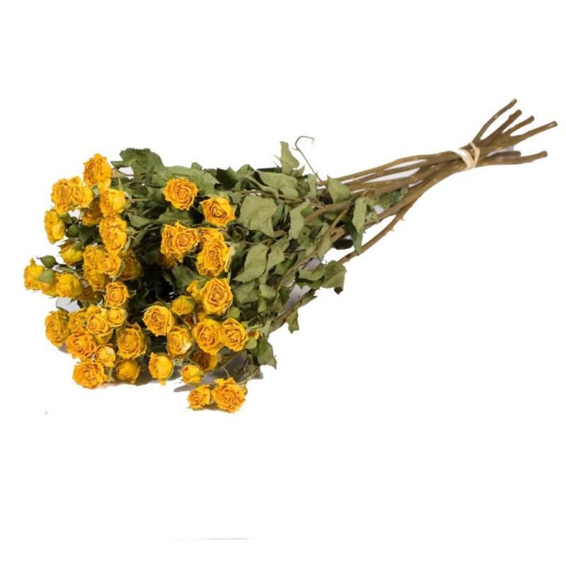 Botte de 10 roses naturelles séchées Ytta - Grossiste fleurs séchées