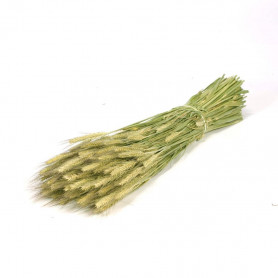 Tritical séché - Grossiste décoration florale