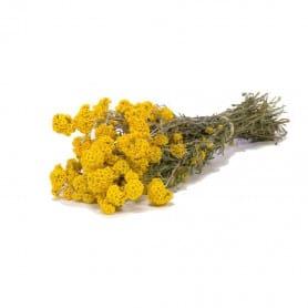 Sanfordi séché - Grossiste décoration florale