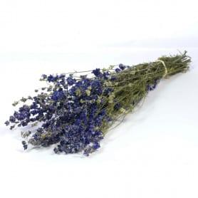 Delphinium nature lséché - Grossiste fleurs séchées