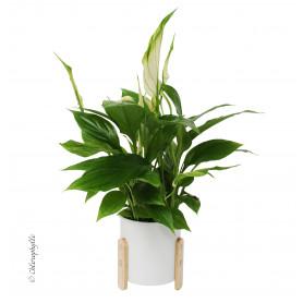 Cache-pot céramique sur pied bois Karta - Grossiste pour fleuriste déco