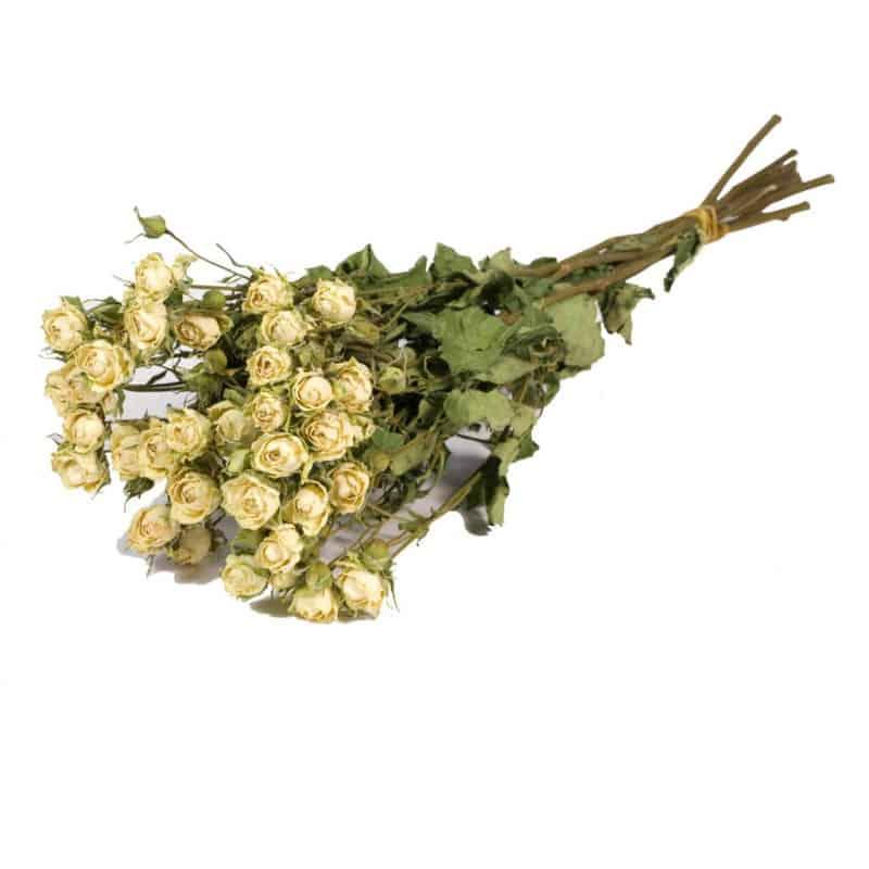 Botte de roses naturelles séchées Blanca - Grossiste fleurs séchées