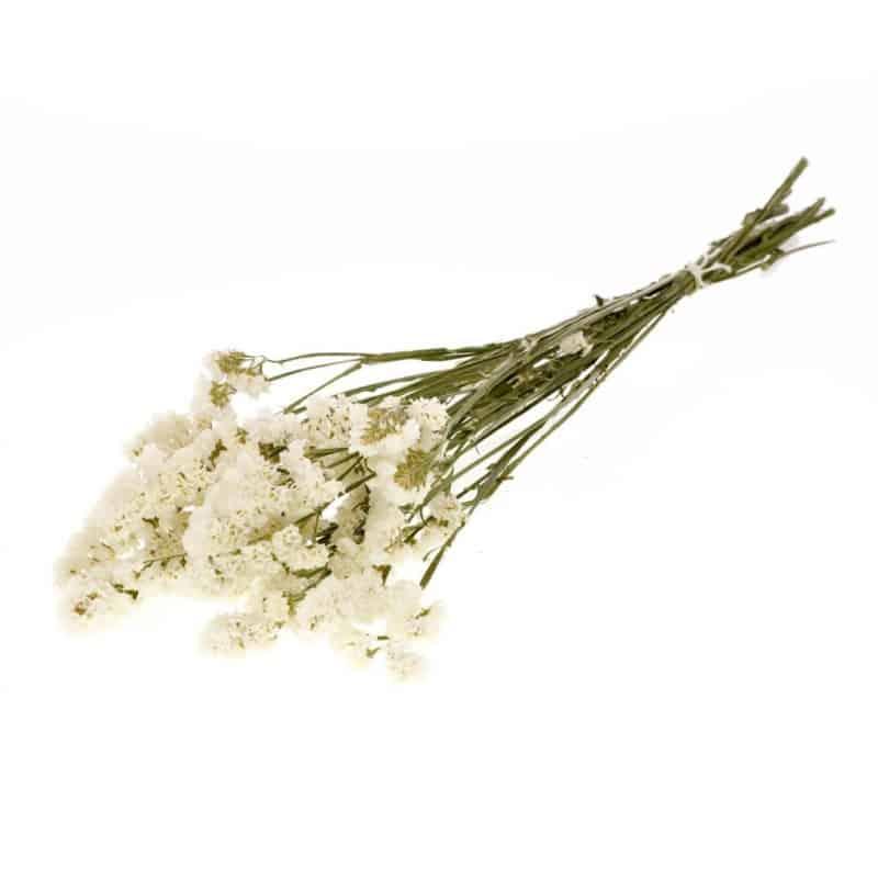 Botte de statice sinuata naturelle séchée Etta - Grossiste fleurs séchées