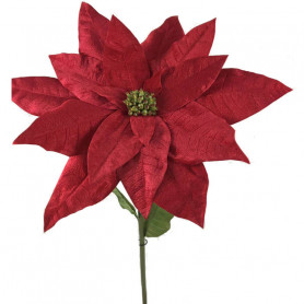 Poinsettia géant Juno