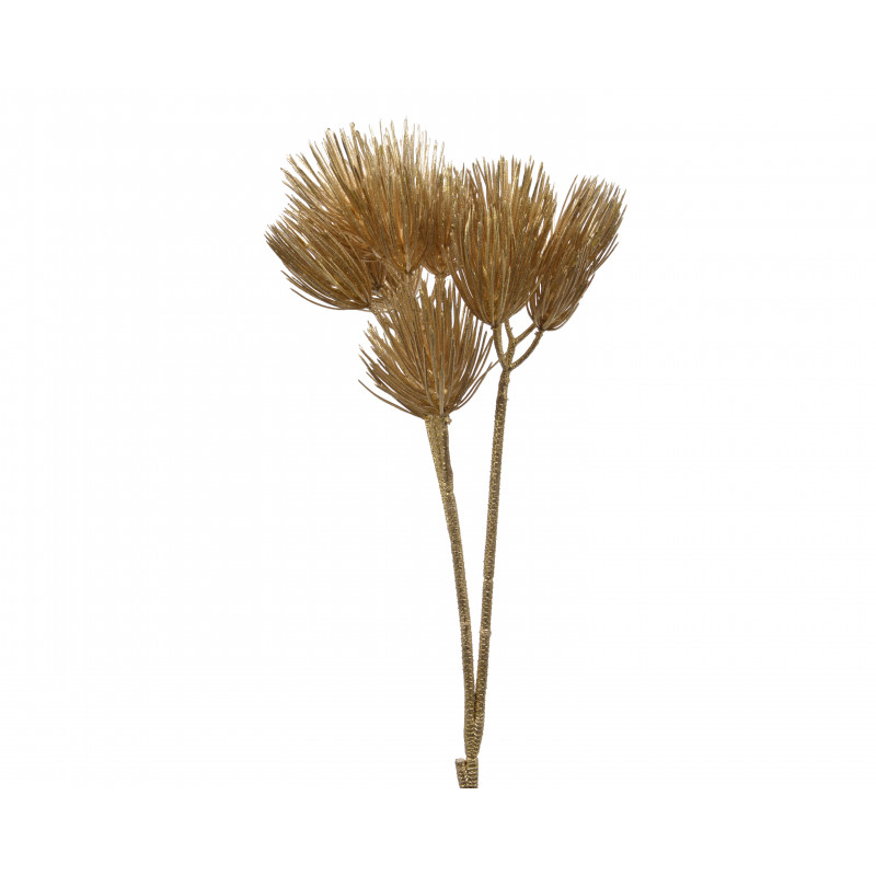 Branche de pin Joa - fleurs séchées grossiste