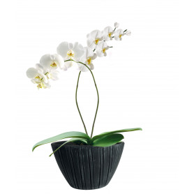 Coupe haute rayée orchidée...