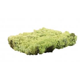 Lichen Duchêne 500 g - mousse stabilisée