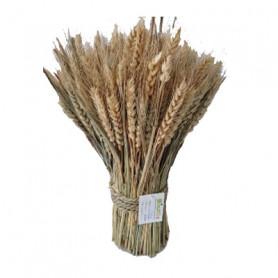 Bouquet de blé 30cm - grossiste fleuriste