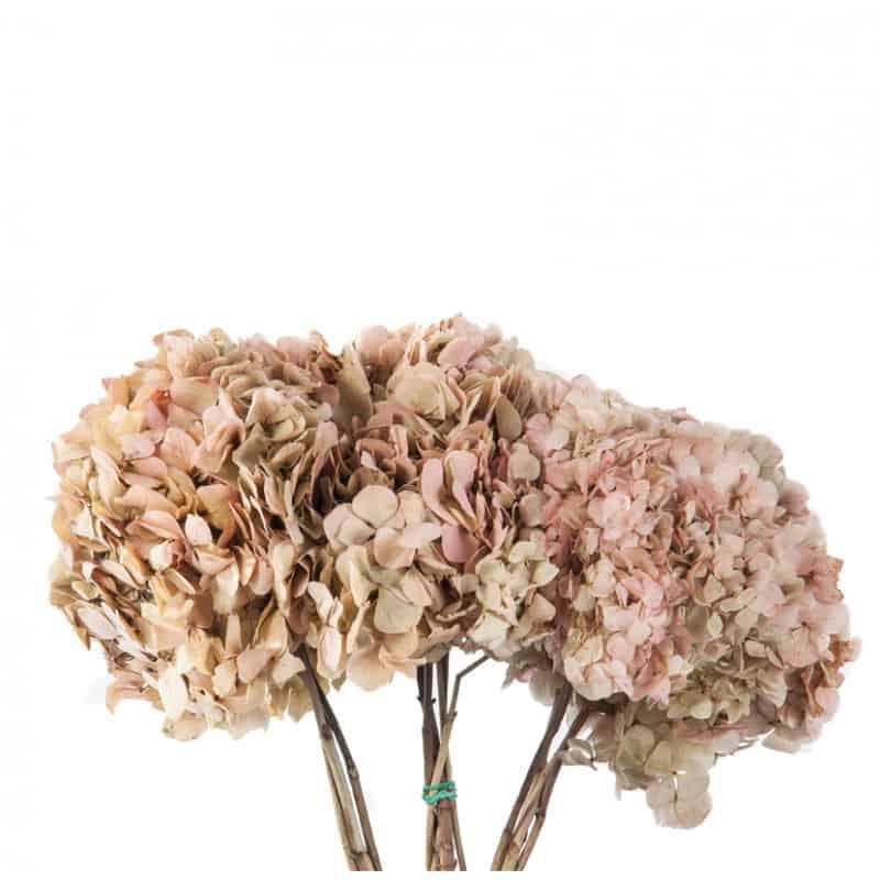Bouquet Hortensia - 2 coloris  - grossiste fleurs