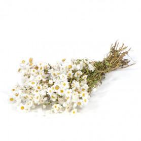Botte de fleurs séchées...