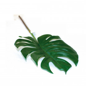 Feuille Philo Monstera