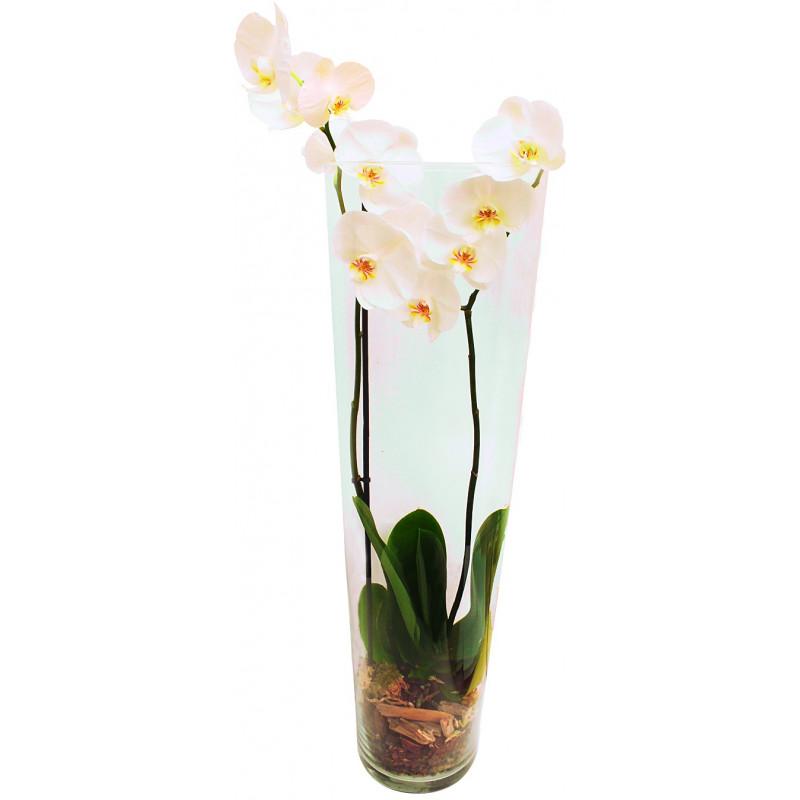 Vase conique orchidée
