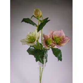 Rose de noël - Hellébore - Plusieurs couleurs - grossiste fleurs stabilisées