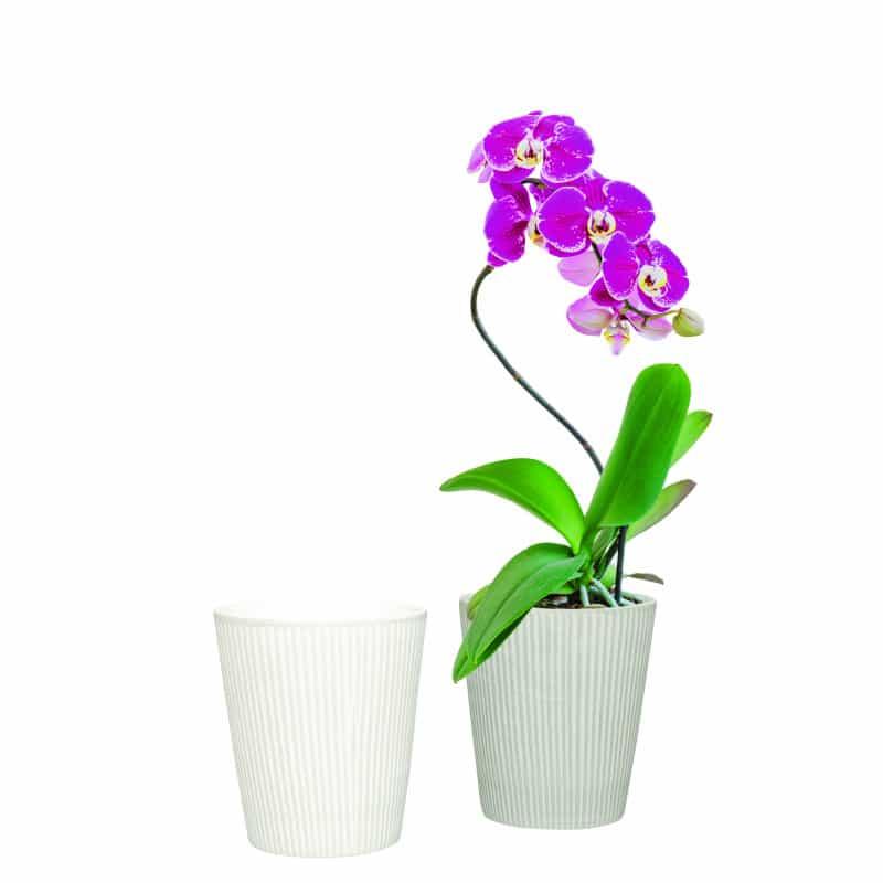Cache-pot phalaéno fantaisie - Grossiste fleuriste décoration tendance