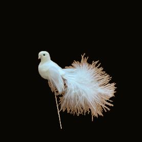 12 oiseaux sur pic Konire