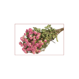Bouquet de 10 roses - Lola