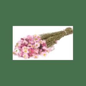 Bouquet d'Acroclinium - Margot