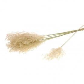 Bouquet de Fluffy Reed...