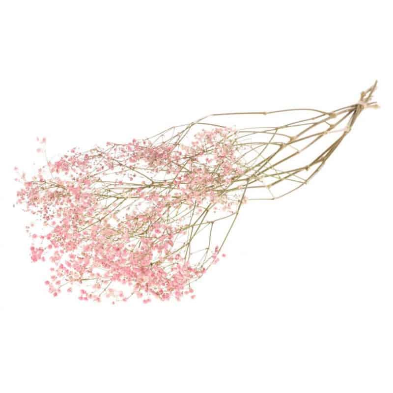 Bouquet de Gypsophile - Flouxa - Fleurs séchées.
