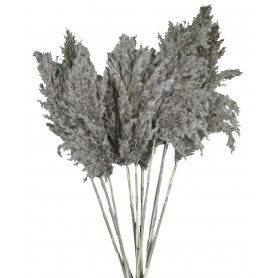 Bouquet de plumes de padule...